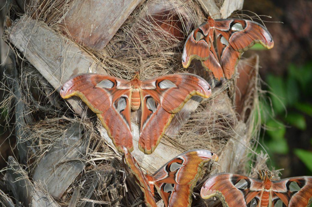 kelebek-konya-canan1