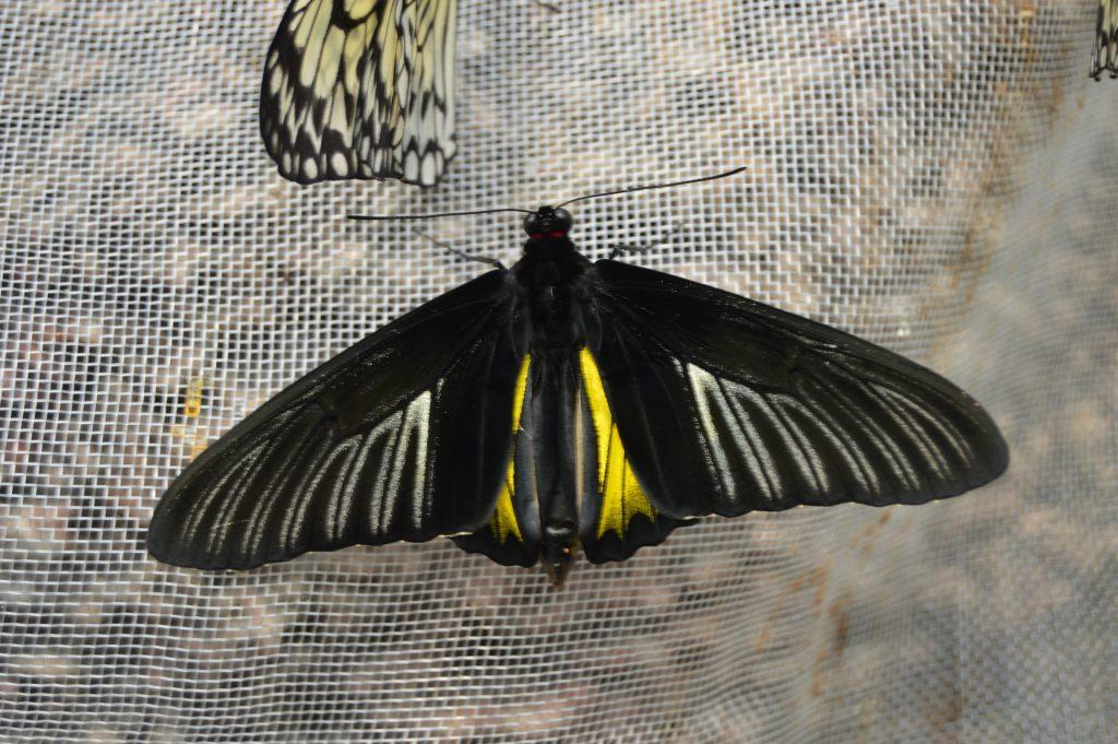 kelebek-konya-canan11