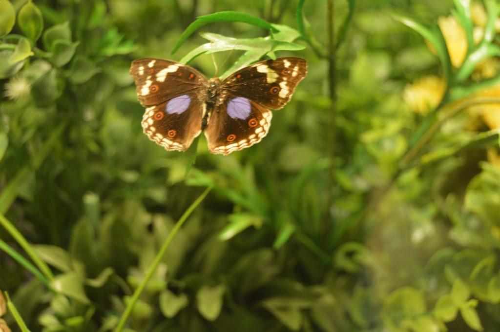 kelebek-konya-canan15