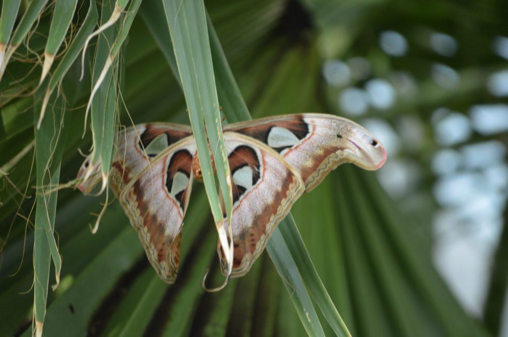 kelebek-konya-canan2