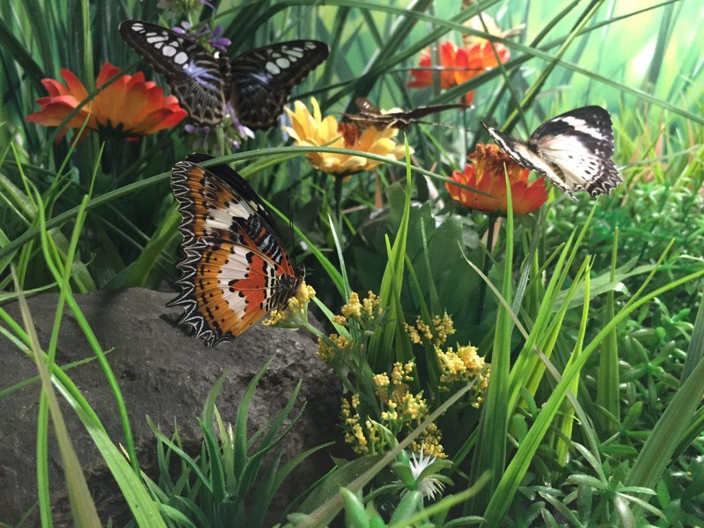 kelebek-konya-canan5