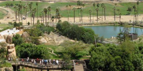 Çocuklu Aileler İçin Bir Cennet: San Diego Safari Park