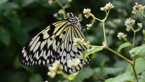 Konya Tropikal Kelebek Bahçesi'ne Gidiyoruz!